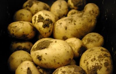 cartofi_1