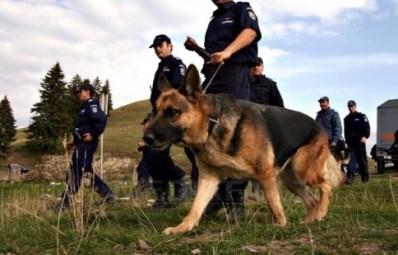 cautari-politie-398x300