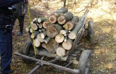 Prins-cu-o-caruta-cu-lemne