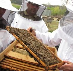 apicultori-01-800x506
