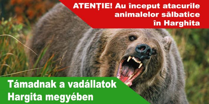 Támadnak-a-vadállatok-Hargita-megyében