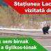 A-medvék-sem-bírnak-ellenállni-a-Gyilkos-tónak