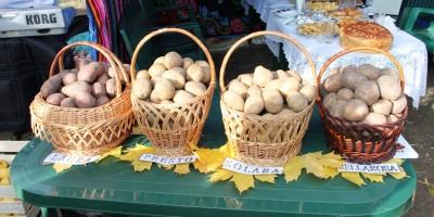 Festivalul_Cartofului_ADR_Nord_14