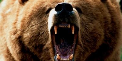 poze_animale_salbatice-urs-fioros