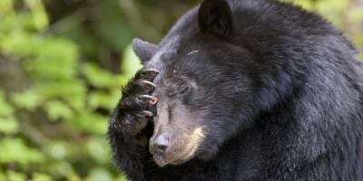 stire-18-iunie-ursi