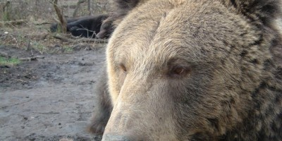 un-barbat-din-bacau-a-fost-atacat-de-urs-ce-a-facut-fiul-lui-este-incredibil-356753