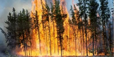 incendiu-padure