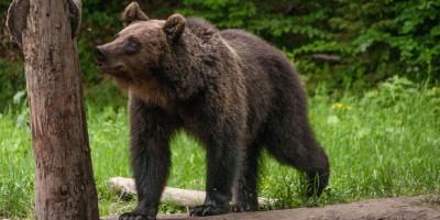 ursi brasov padure (5)