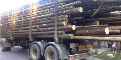 camion-cu-lemne-1