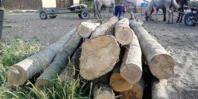 lemne-fara-documente-2
