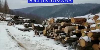 lemn1