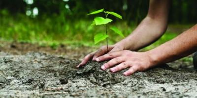 1-luna-plantarii-arborilor-la-directia-silvica-botosani